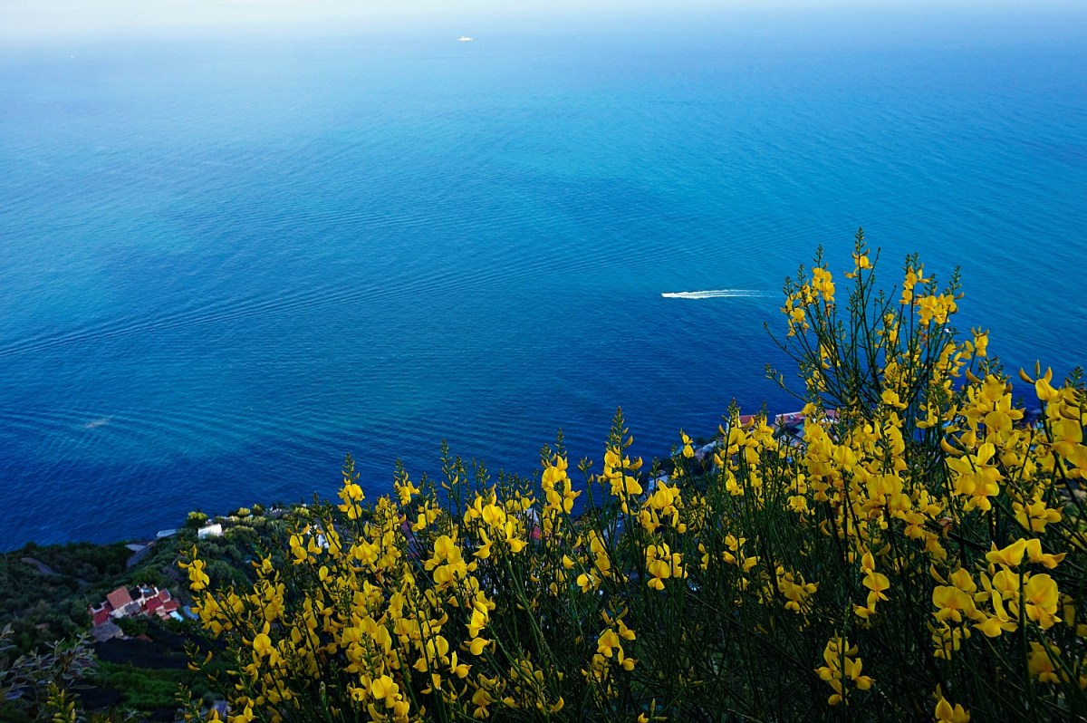 Blue sea and yellow flowers in Ravello Italy.