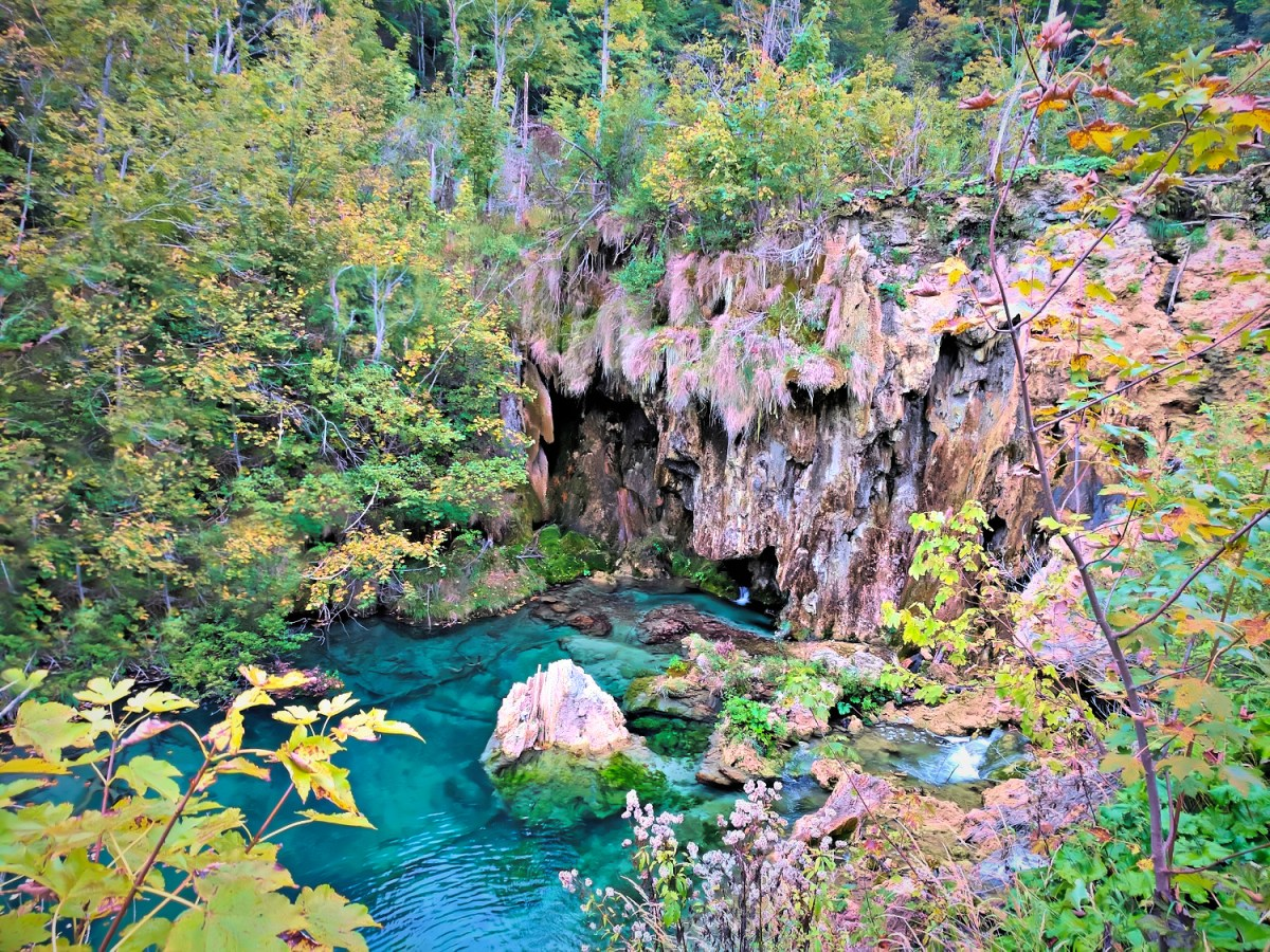 Small turquoise lake with wall of plants around it and a boulder in the middle.