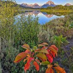 Oxbow Bend in Grand Teton.