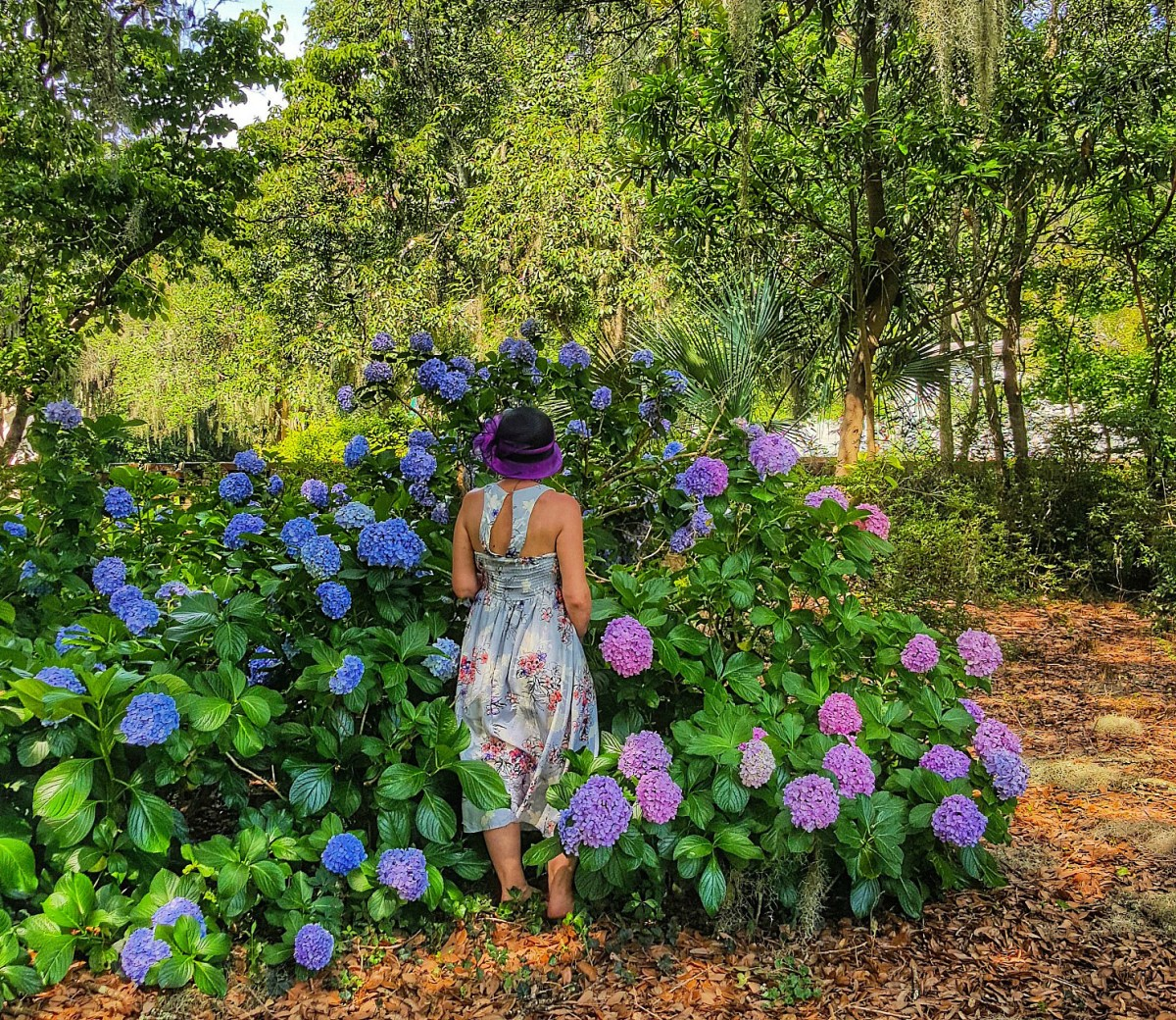 Myrtle Beach what to it. Brookgreen Garden deliver beauty and shade.