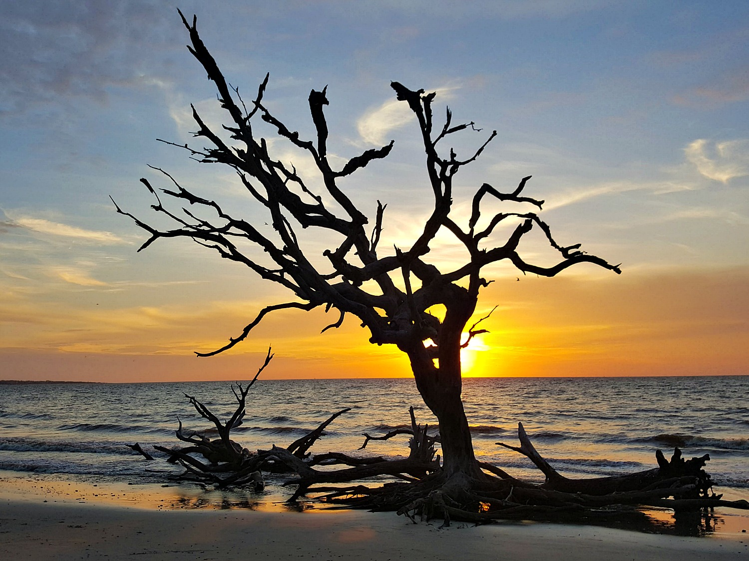 Jekyll Island driftwood beach at sunrise.