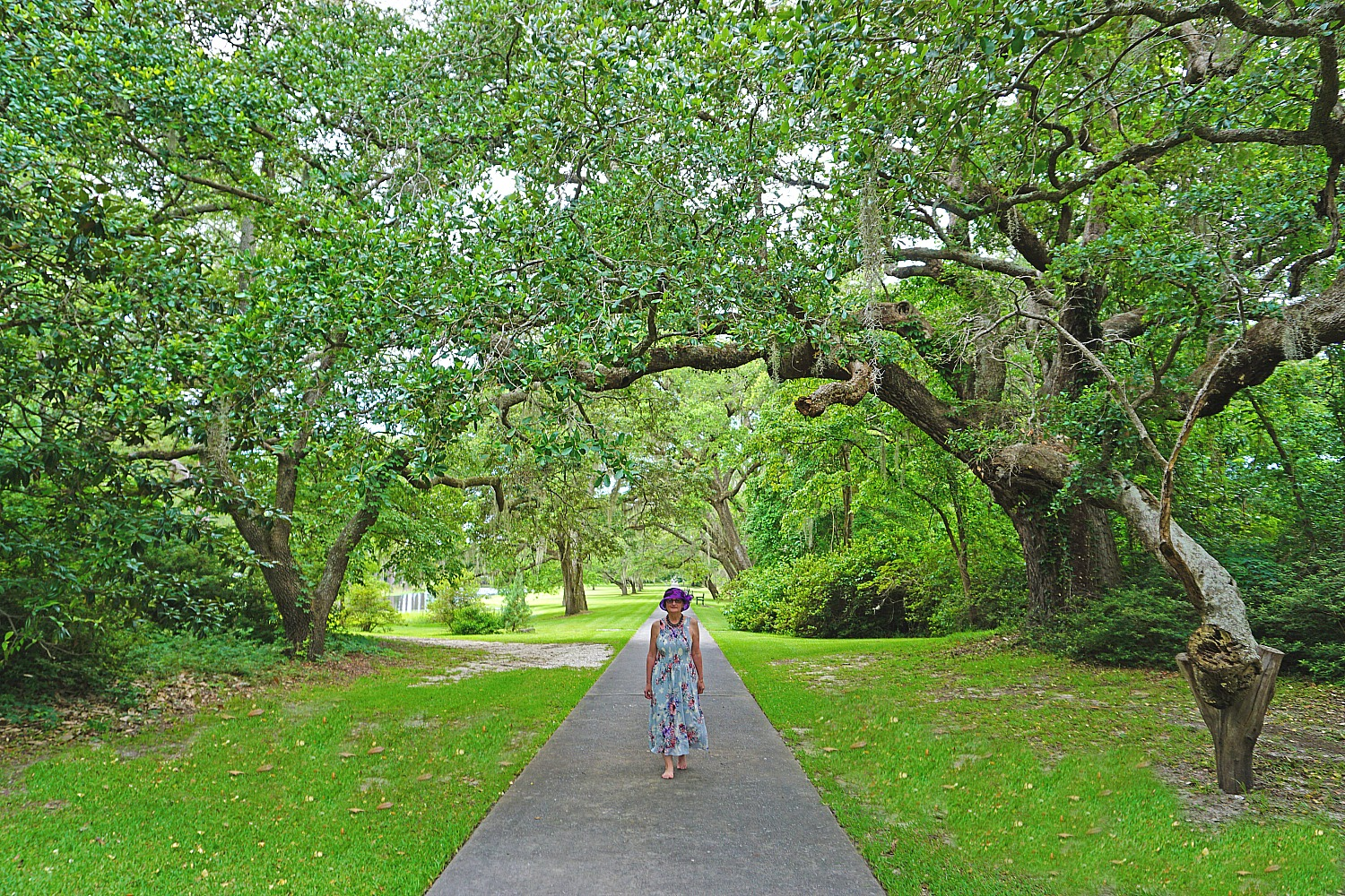 Myrtle Beach -things to do. Escaping to nature in Brookgreen Gardens, South Carolina.