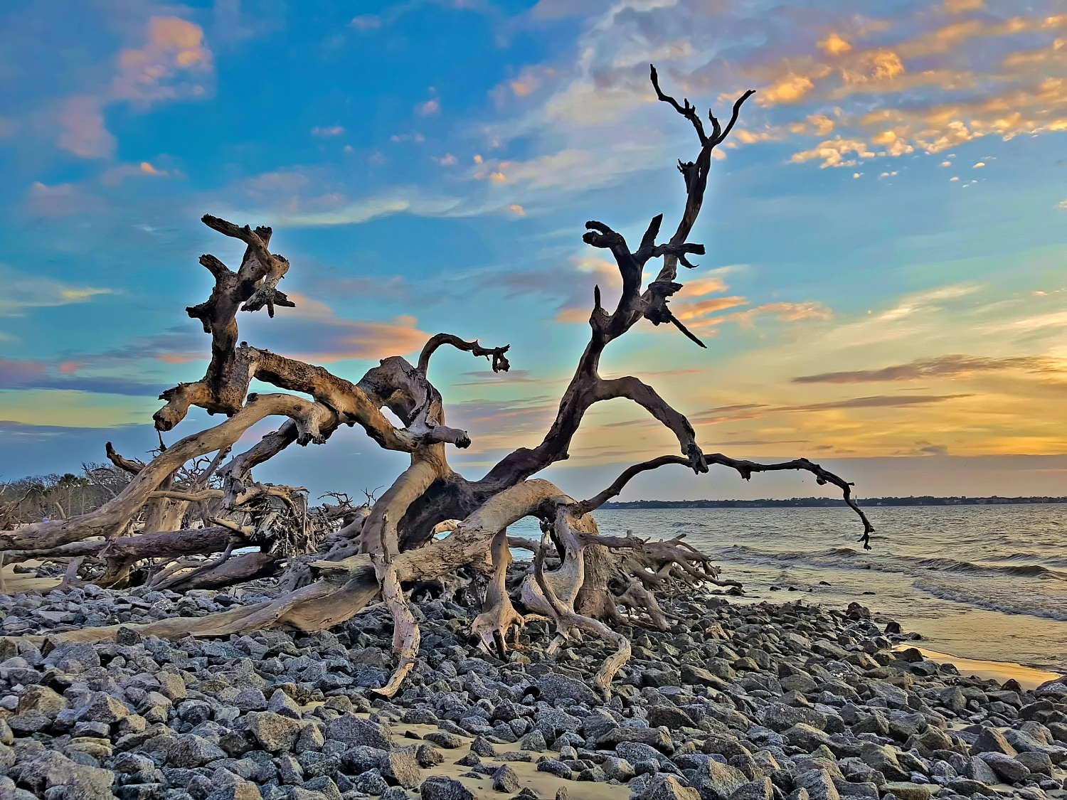 Driftwood Beach on Jekyll Island, Georgia.