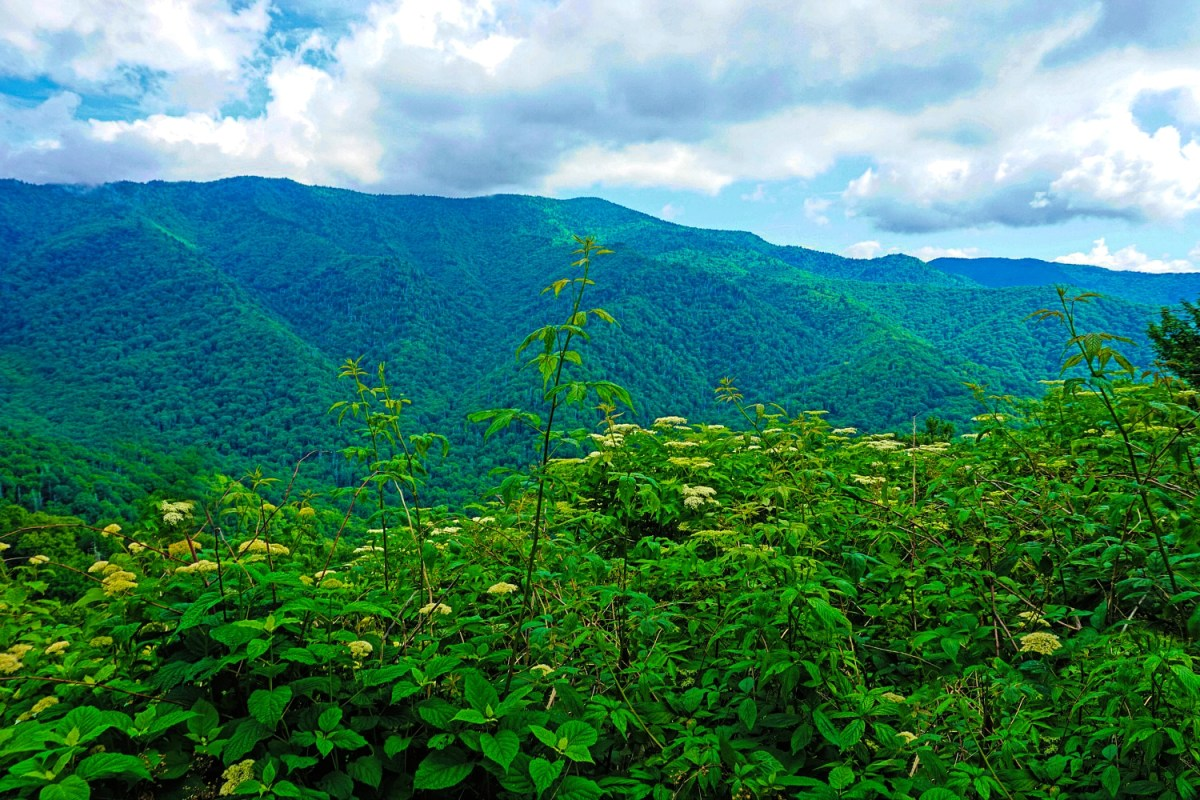 Spring is a perfect time to visit the Great Smoky Mountains National Park.