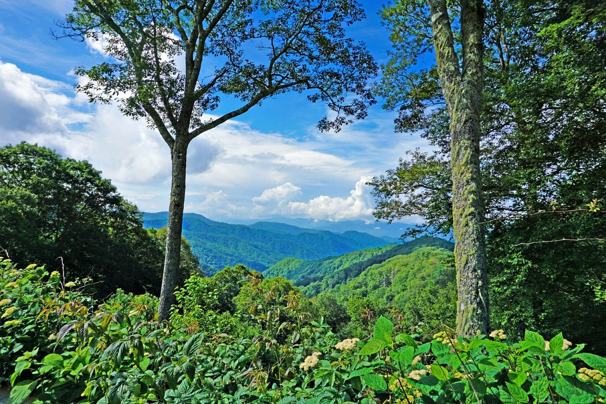 Great Smoky Mountains National Park. How to visit in spring.