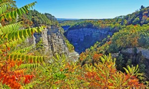 Best state parks in New York State. Letchworth State Park - the gorge seen through the leaves.