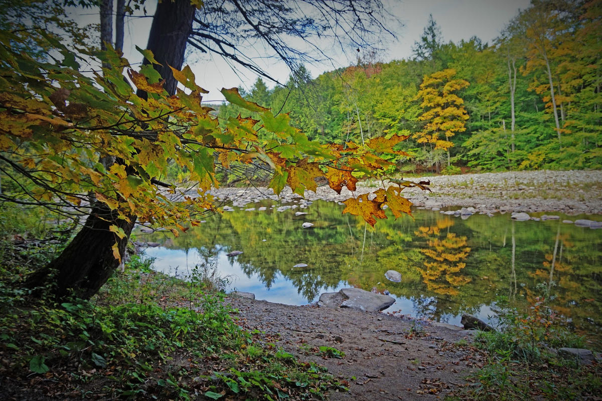 Loyalsock Creek seen through the leaves at Worlds End State Park.