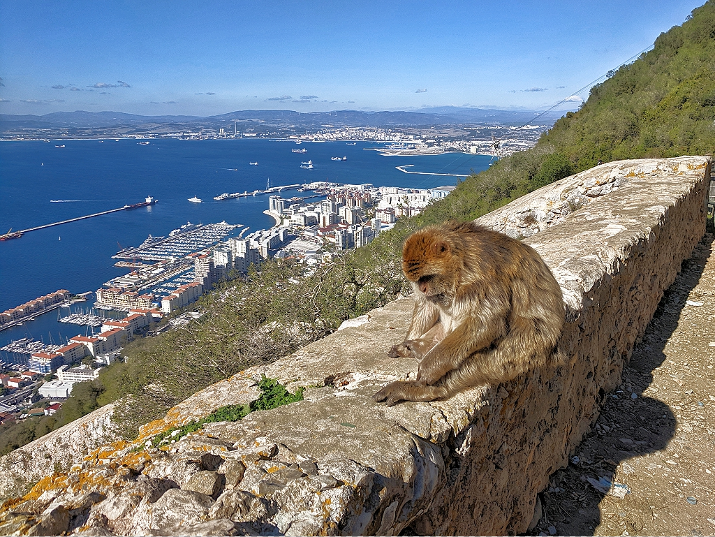 Monkeys feel at home at Rock of Gibraltar.