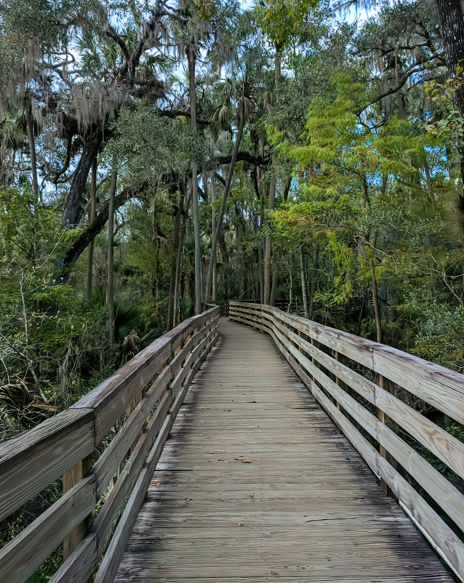 A walking path at Blue Spring State Park, Florida.