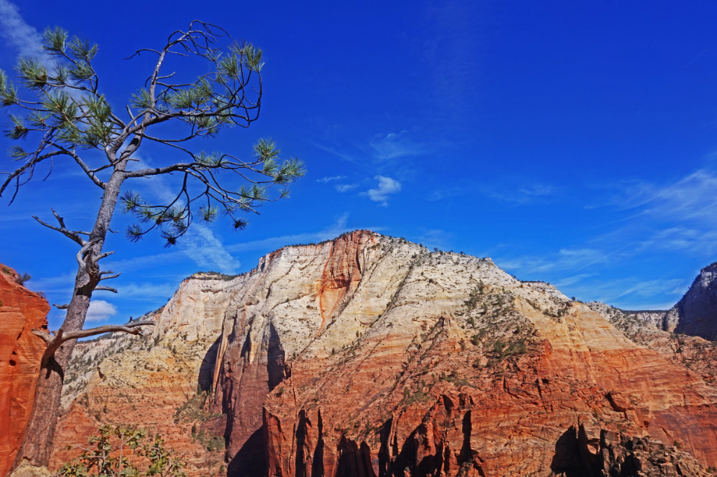 View of the rocks from the Angels Landing hiking trail in Zion National Park.
