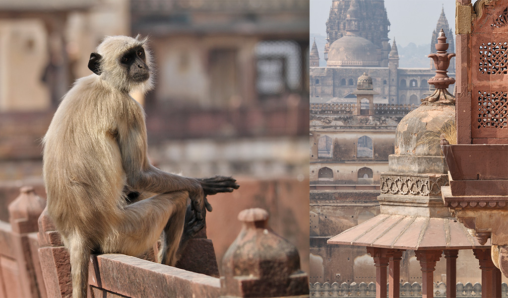 India off the beaten track - Orchha