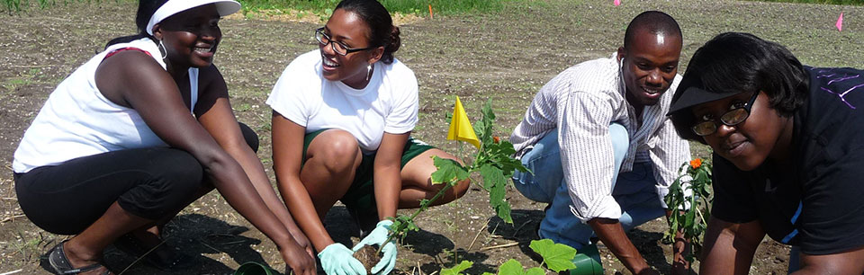 A photograph of four young people planting flowers in a community garden.