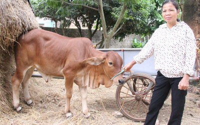 Cowbank Empowers Family to Improve Living Conditions