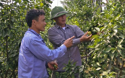 Farmers Visit Successful Orange Growing Model