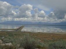 Friends visiting means a drive down the causeway to Antelope Island