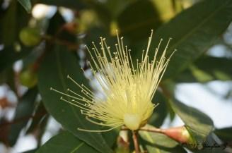 macro-flower-1