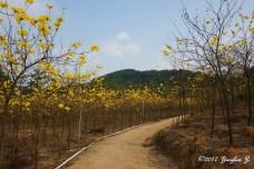 path-11