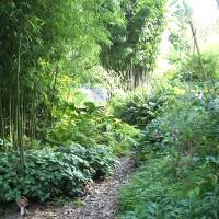 Help mee de V.U. Hortus Botanicus te redden!