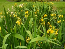 Iris Darwinpark thv.E.Heimanshof