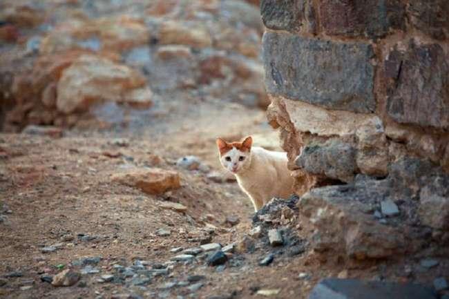 Очень колоритные уличные коты. Часть 4 (30 фото)