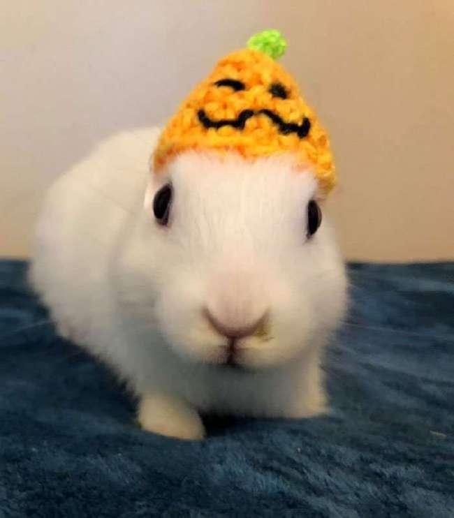 Хозяйка связала безухому кролику новые ушки