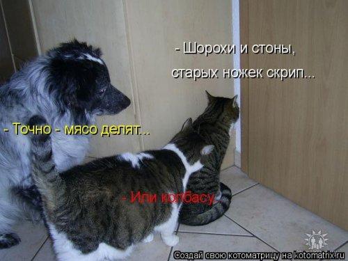 Лучшая котоматрица недели (40 фото)