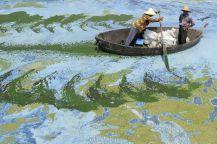 pescar - Hefei, Anhui Province