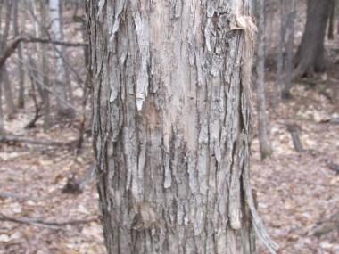 Tree #5