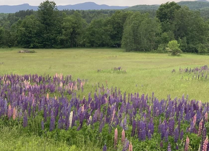 designing meadows
