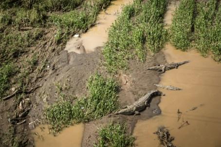 Crocodiles... Oh Snap!