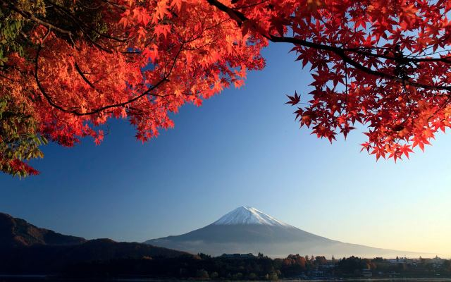 Mt. Fuji and autumn-colored maple tree