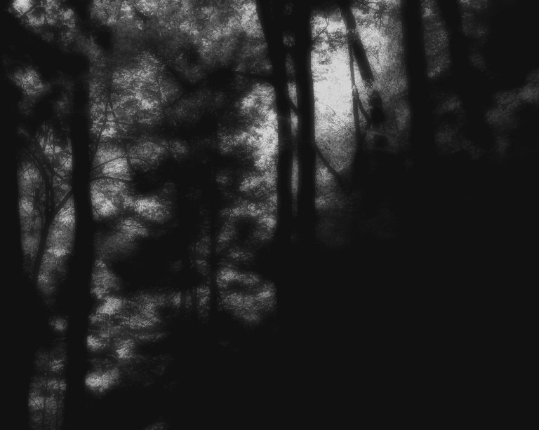 dark forest obscured in texture and stripped of colour