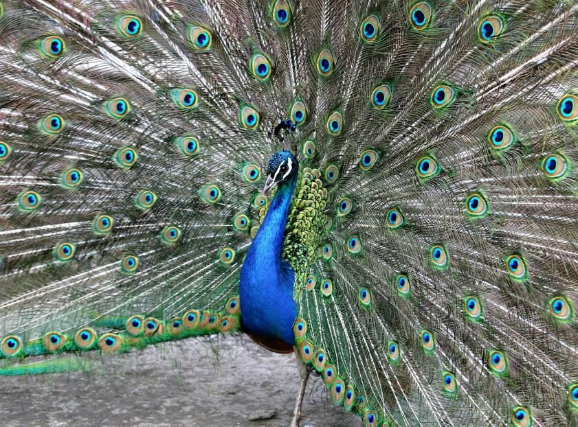 Brag, boast, or peacock, it's all hot air.