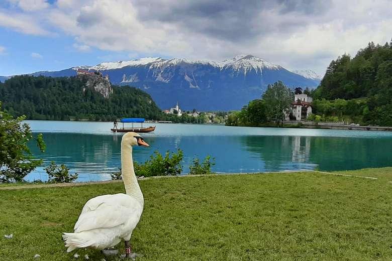 Jednodnevni izlet iz Zagreba na Jezero Bled