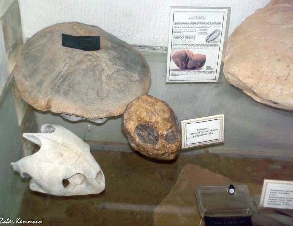 usée mémoire de la terre Tataouine (1) متحف ذاكرة الارض تطاوين