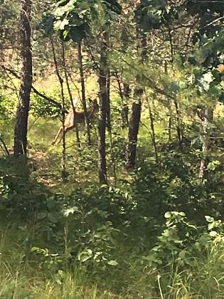 Deer spotting everywhere!