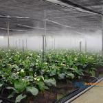 噴霧系統 溫室