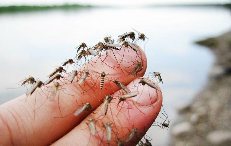накацали комари