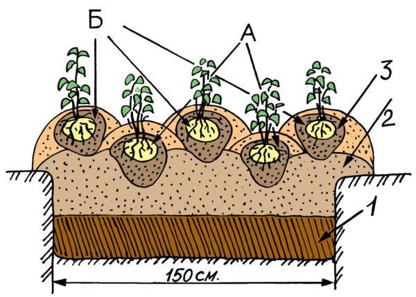 засаждане на картофи