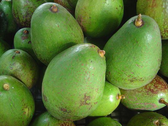 свойства на костилката от авокадо