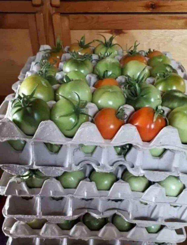 зелени домати в картон