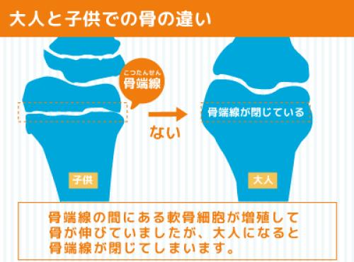 大人と子供での骨の違い図解