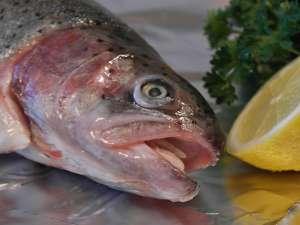 Қосымша пайдалы лосось немесе форель дегеніміз не