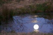 Moon's Reflection On Pond, walker family farm, oklahoma, 12/07
