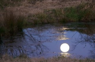 Moon's Reflection On Pond, walker family farm, oklahoma, 12/07