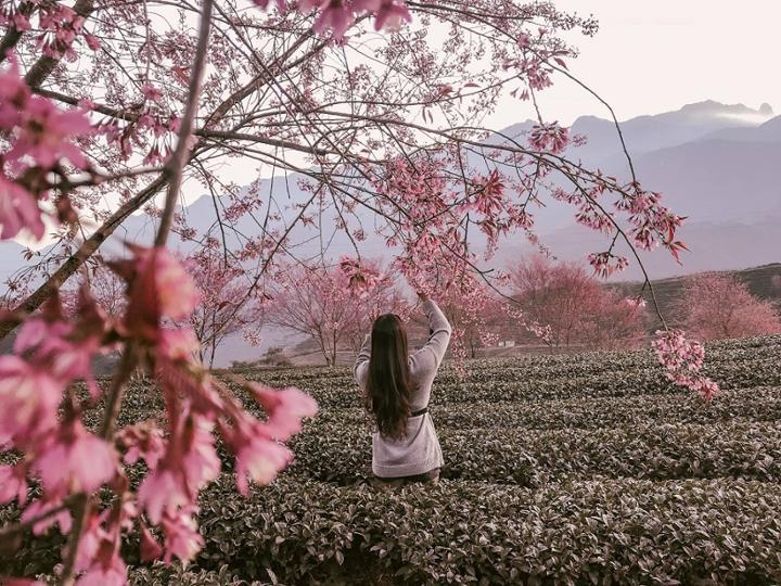 5 lý do du khách nên đến du lịch Sapa vào dịp Tết đến xuân về