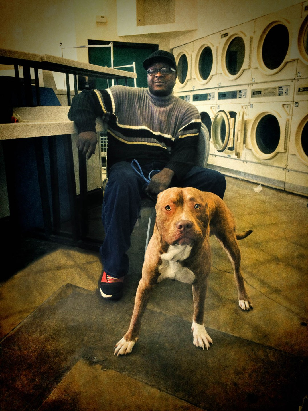 Pitbull in laundromat ©2014 Larry Zamba