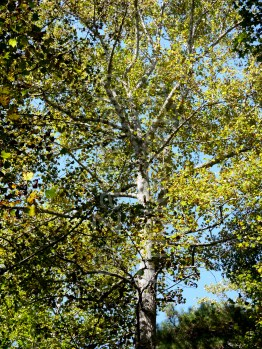 trees, woods, sunlight, leaves, forest, north carolina