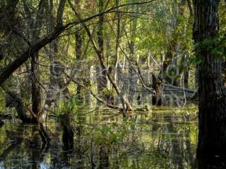 trees, lake, water, fall, foliage, autumn, falls lake, water, forest, nature