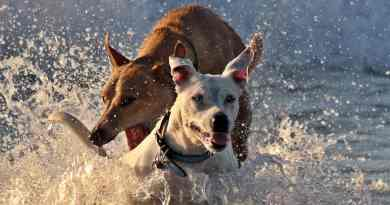 Water Intoxication in Dogs (Causes, Symptoms & Treatments)